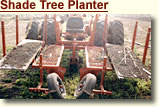Shade Tree Planter